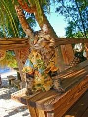 cat-aloha-shirt
