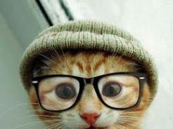 cat-in-a-hatjpg