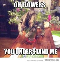 funny-cat-sleeping-flowers