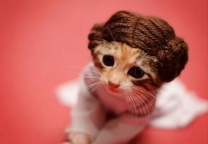 kitty-rug-comp