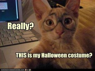cat-halloween