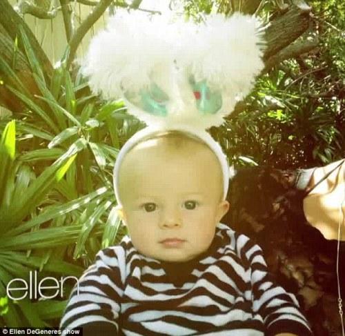 Baby Lion on Ellen