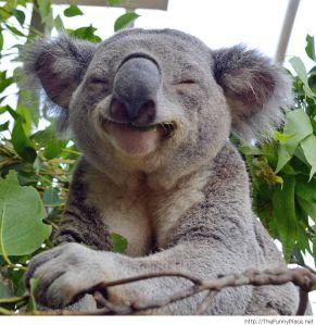 koala-smartass
