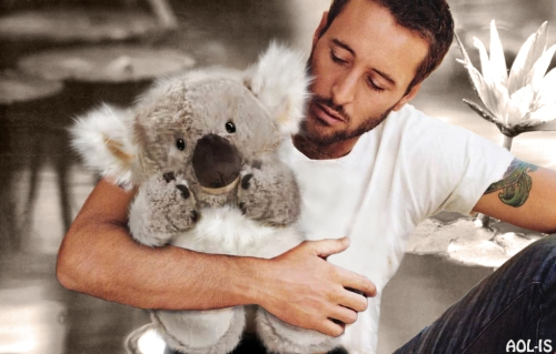 koala hug al dl