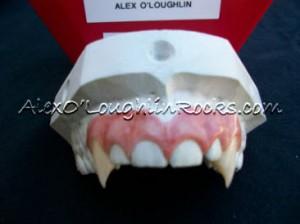 Mick St. John's vampire teeth were custom made for Alex O'Loughlin's bite.