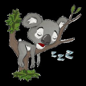 Koala_Sleeping