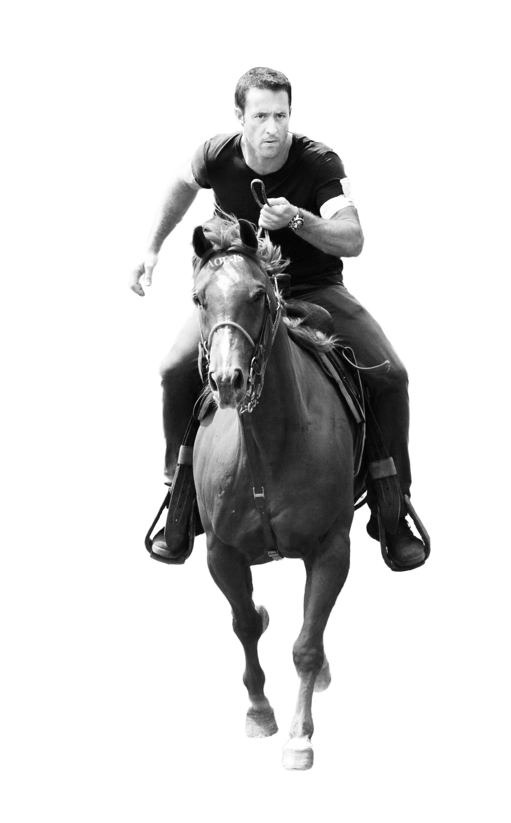 408 bw promo horse empty