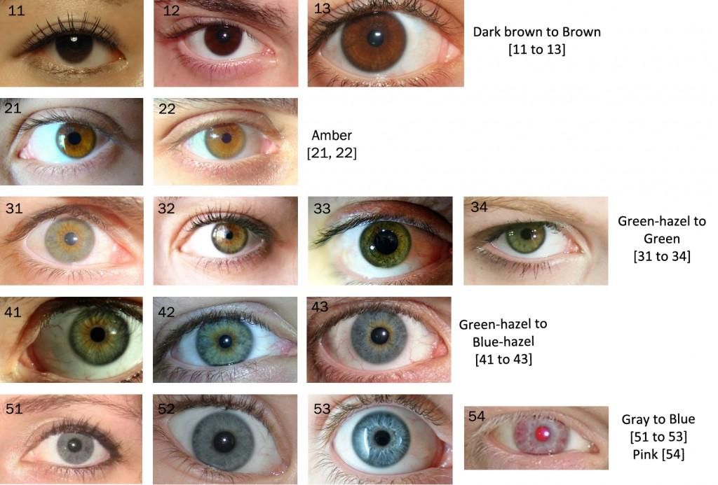 Eye Colour Chart Alex Oloughlin An Intense Study