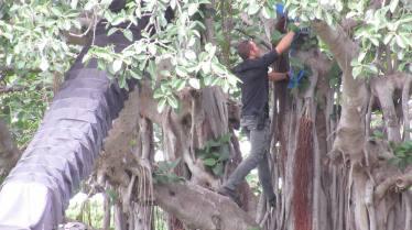 From Hawaii Isla 808 - Alex in tree (4)