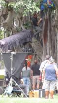 From Hawaii Isla 808 - Alex in tree (5)