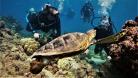 diving vlcsnap-2017-10-21-14h44m02s672